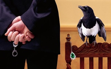 Thieving magpie with stolen gem caught in the act