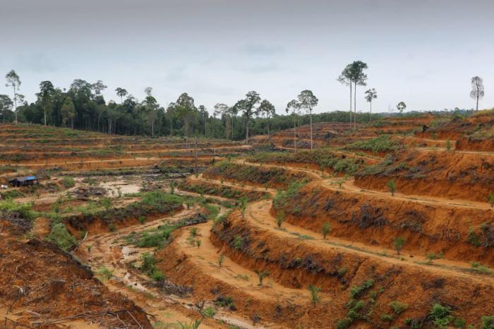 Indonesia-deforestation